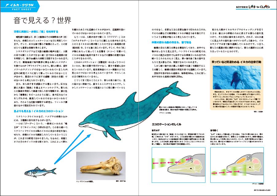 <イルカ・クジラⅣ 音の世界で生きるイルカ・クジラ>