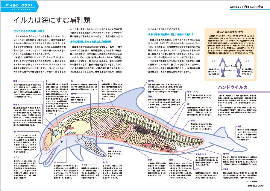 <イルカ・クジラⅠ イルカは海にすむほ乳類>