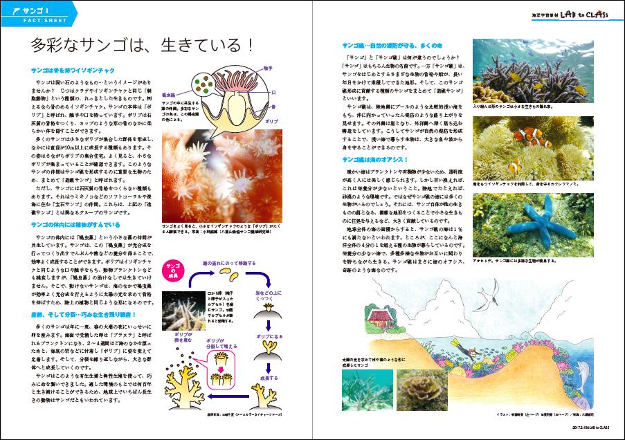 <サンゴⅠ 多彩なサンゴは、生きている!>