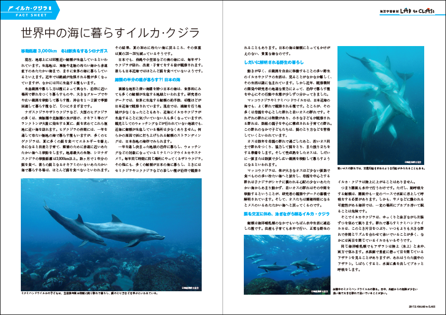 <イルカ・クジラⅡ 世界中に暮らすイルカ・クジラ>