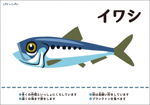 海の生物カード※各カードの大きなデータは【関連教材】からダウンロードできます。