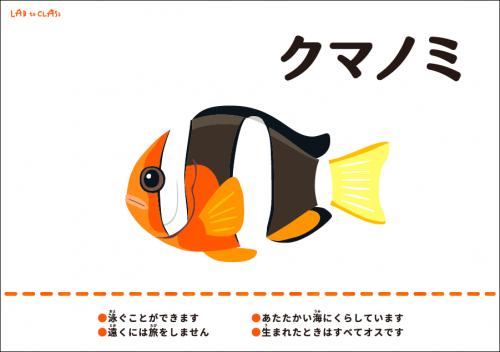 海の生物カード