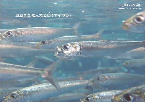 資料:さまざまな魚の口(写真カード)