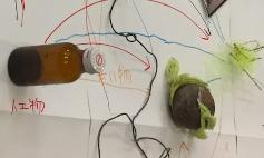 1.用意した漂着物を模造紙の上に円を描くように置き、共通点のあるものを探して線で結びます。