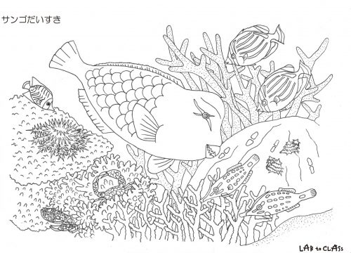 ぬり絵シート「サンゴだいすき」