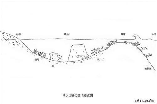 サンゴ礁の環境模式図例