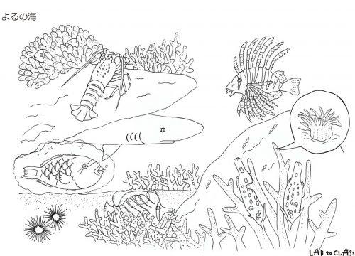 ぬり絵シート「よるの海」