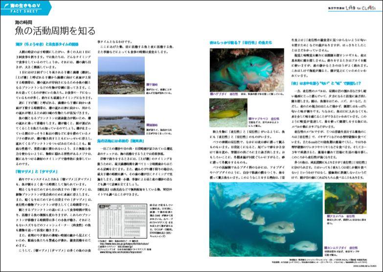 <海のいきものⅤ 魚の活動周期を知る>