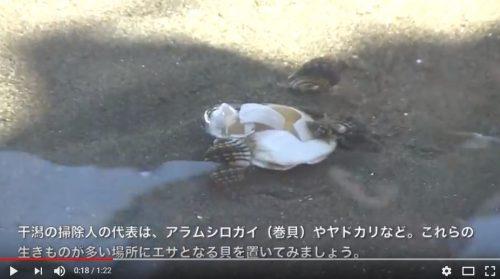 2.殻を割った二枚貝を干潟の上に置いて、じっと観察します。