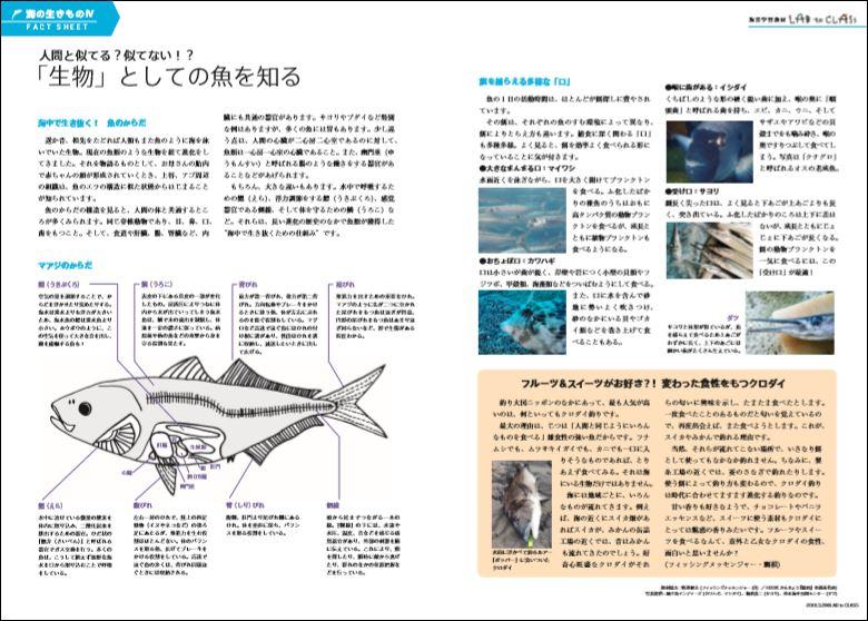 <海のいきものⅣ 「生物」としての魚を知る>