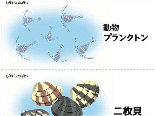 『お魚のごはん』カード